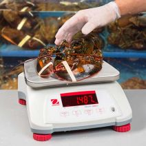 Alliance/Ohaus Valor 4000 Compact Bench Scale